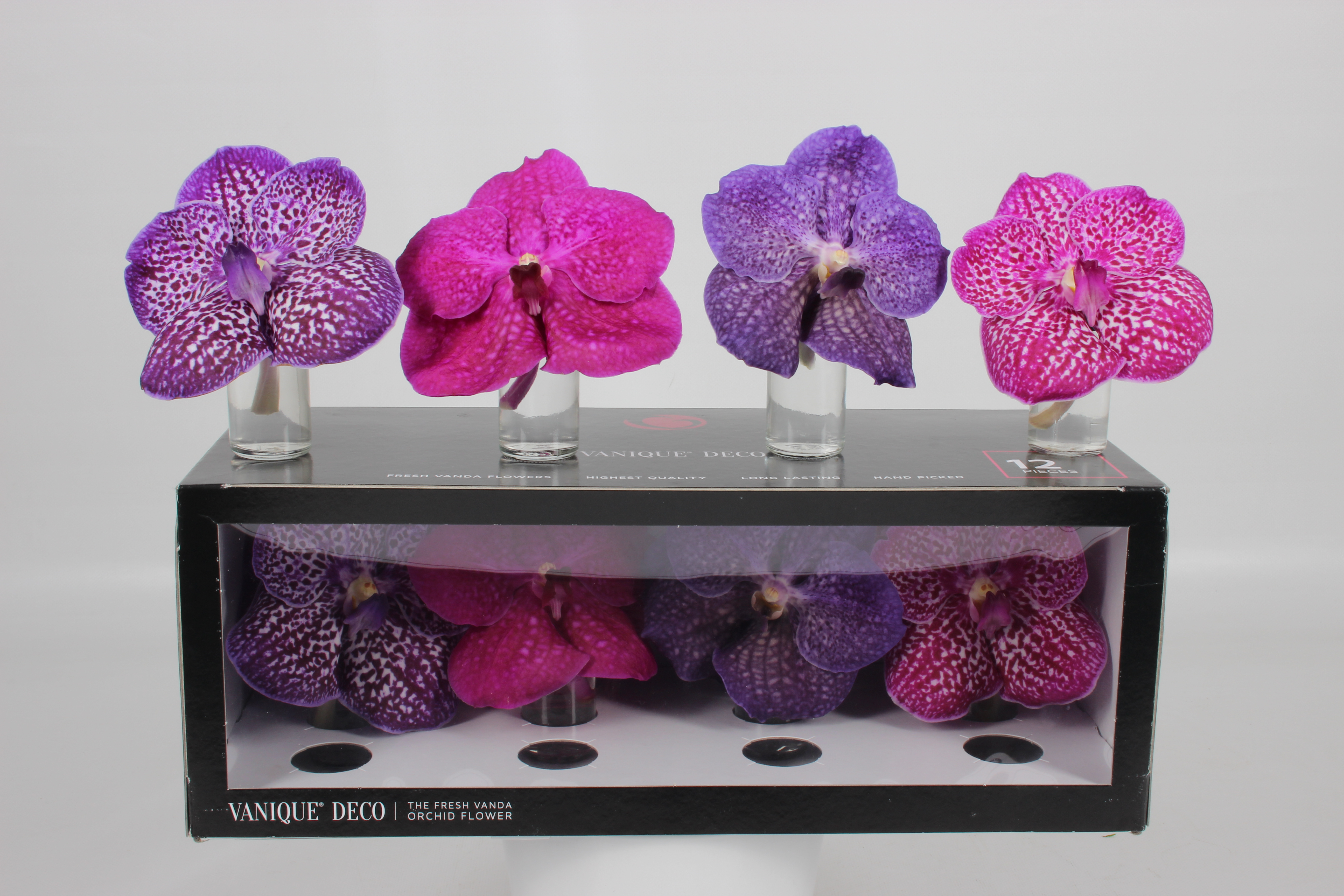 grower of the week anco pure vanda g fresh. Black Bedroom Furniture Sets. Home Design Ideas