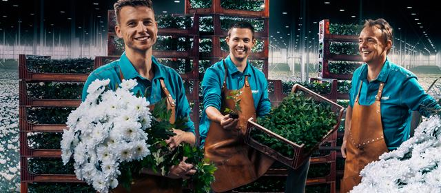 Grower of the week! Beyond Chrysanthemum