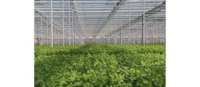 Grower of the week! Santini grower de Landscheiding
