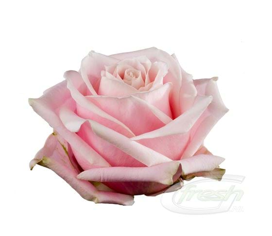 Sweet Avalanche
